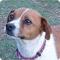 Adopt A Pet :: Janey - Arlington, TX