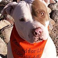 Adopt A Pet :: Petunia - Aurora, CO