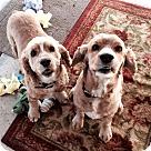 Adopt A Pet :: George (andGinger)