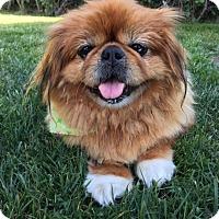 Adopt A Pet :: Cecelia (aka