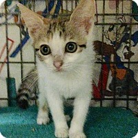 Adopt A Pet :: Ginger - East Brunswick, NJ