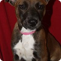 Adopt A Pet :: Smores - Waldorf, MD
