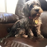 Adopt A Pet :: Tilly (Adoption Pending) - Sharonville, OH