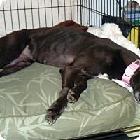 Adopt A Pet :: Daze - Spencerville, MD