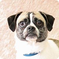Adopt A Pet :: Booker - Modesto, CA