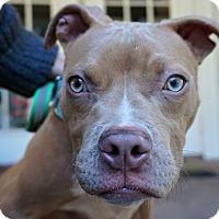 Adopt A Pet :: Opal - Ft. Myers, FL