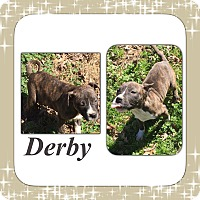Adopt A Pet :: Derby IN CT - Manchester, CT