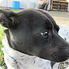 Adopt A Pet :: Mercury