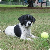 Adopt A Pet :: Specktre - Glastonbury, CT
