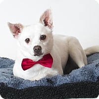 Adopt A Pet :: Roscoe - Rancho Cordova, CA
