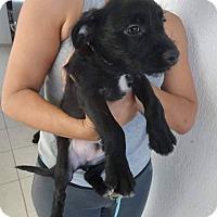 Adopt A Pet :: Kyler - Vancouver, BC