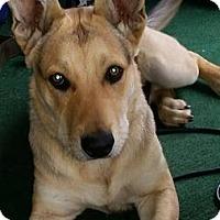 Adopt A Pet :: Buddy - Lomita, CA