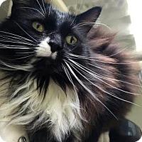 Adopt A Pet :: Marta - Fort Collins, CO