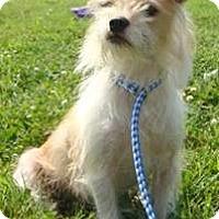 Adopt A Pet :: Zuza - Oswego, IL