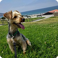 Adopt A Pet :: Berkeley - Manhattan Beach, CA