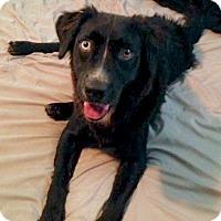 Adopt A Pet :: Styx-ADOPTED! - Davenport, IA