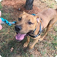 Adopt A Pet :: Sammy - Durham, NC