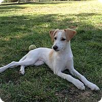 Adopt A Pet :: Kiwi - El Cajon, CA