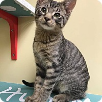 Adopt A Pet :: Marty - Maryville, MO