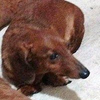 Adopt A Pet :: Rusty - Georgetown, KY