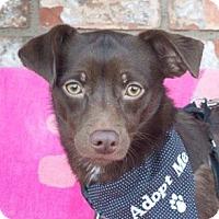 Adopt A Pet :: Kenna - San Marcos, CA