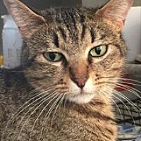 Adopt A Pet :: Annie - McKinney, TX