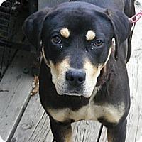 Adopt A Pet :: Bessie - Toledo, OH