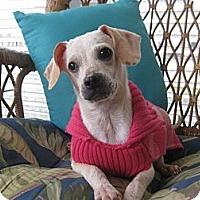 Adopt A Pet :: Tesla - Homewood, AL