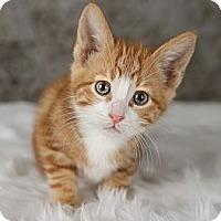 Adopt A Pet :: Dino - Eagan, MN