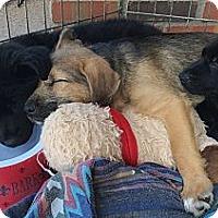 Adopt A Pet :: Bradley - Phoenix, AZ