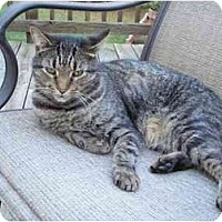 Adopt A Pet :: Megas - Richmond, VA