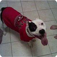 Adopt A Pet :: Kobe - Blanchard, OK