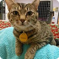 Adopt A Pet :: Sandie - Reston, VA