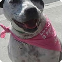 Adopt A Pet :: Cookie - Lake Forest, CA