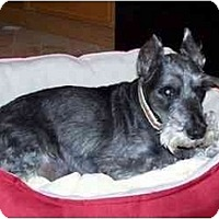 Adopt A Pet :: Charlie - Madison, WI