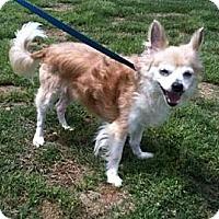 Adopt A Pet :: Ripley - Southampton, PA