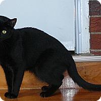 Adopt A Pet :: PRECIOUS or INKSPOT - Springfield, PA