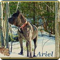 Adopt A Pet :: Ariel - Berthierville / Sorel, QC