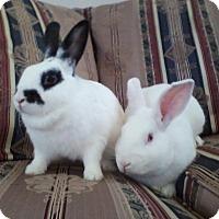 Adopt A Pet :: Bean & Maddie - Watauga, TX