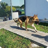 Adopt A Pet :: Yoli - Pompano Beach, FL