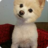 Adopt A Pet :: Romero - Detroit, MI