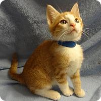Adopt A Pet :: Frankie - Bentonville, AR