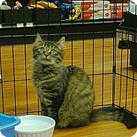 Adopt A Pet :: Sheena - Caistor Centre, ON
