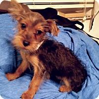 Adopt A Pet :: Mason - Fairview Heights, IL