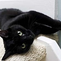 Adopt A Pet :: Vlad/Smart, Loves to Talk - Bryn Mawr, PA