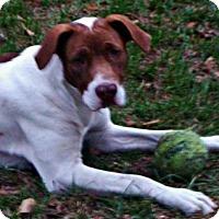 Adopt A Pet :: Naya - Jesup, GA