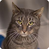 Adopt A Pet :: Albus - Toronto, ON