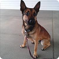 Adopt A Pet :: Ronan - Louisville, KY