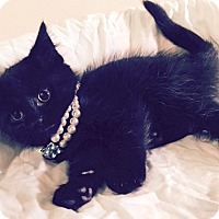 Adopt A Pet :: Akela - Addison, IL