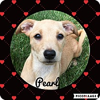 Adopt A Pet :: Pearl - Livermore, CA